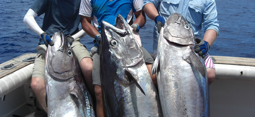Dogtooth Tuna deep jigging on Kadavu Seamount from Bite Me