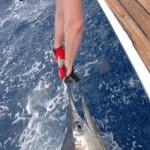 Blue Marlin aboard Bite Me (4)