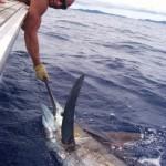 Blue Marlin aboard Bite Me (6)
