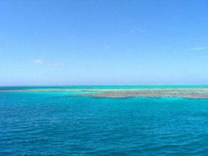 Fly Fishing the coral reefs